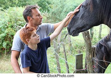 chevaux, campagne, caresser, enfants, parents