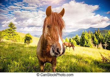 chevaux, carpathian, éclairé, beauté, ukraine, endroit, sale, pâturage, sun., europe., world., pâturage, emplacement
