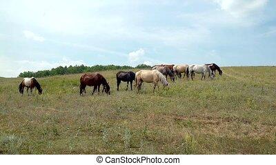 chevaux, ciel, pâturage, fond