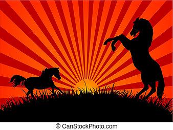 chevaux, coucher soleil, deux