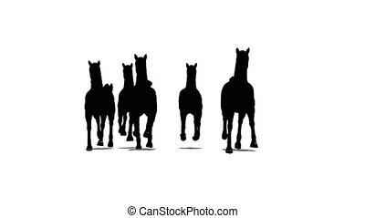 chevaux, courses, silhouette, troupeau, devant, par, arrière-plan noir, vue, blanc