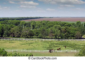 chevaux, Cultures, aérien,  corral, troupeau, vue