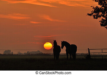 chevaux, dans, coucher soleil
