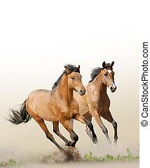 chevaux, dans, poussière