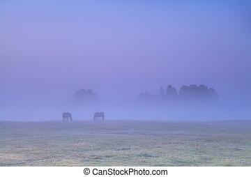 chevaux, dense, brouillard, pâturage, pâturage, levers de soleil