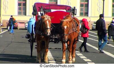 chevaux, deux, équipe