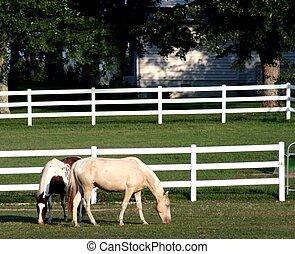 chevaux, deux, corral