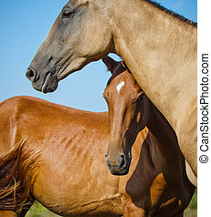 chevaux, deux
