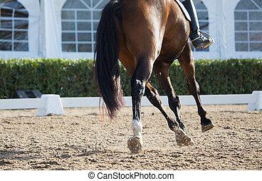 chevaux, dressage
