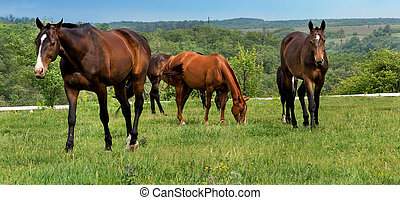 chevaux, ferme