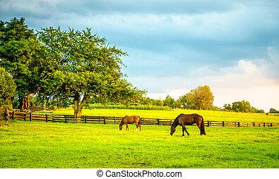 chevaux, ferme, kentucky