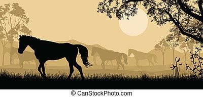 chevaux, fond, troupeau