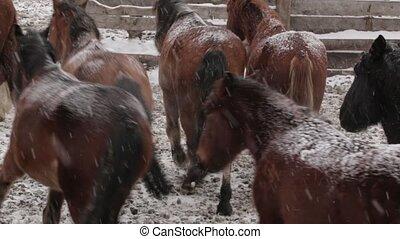 chevaux, hiver, ferme, neige, troupeau, sous, froid