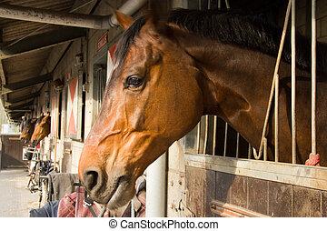 chevaux, leur, box