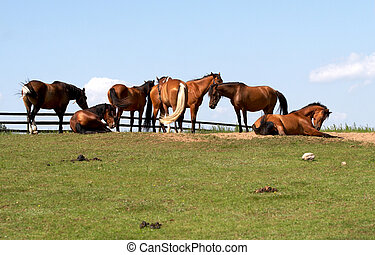 chevaux, liberté