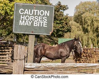 chevaux, mai, morsure, prudence