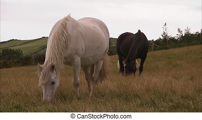 chevaux, manger, trois