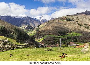 chevaux, montagne, europa, de, picos, paysage