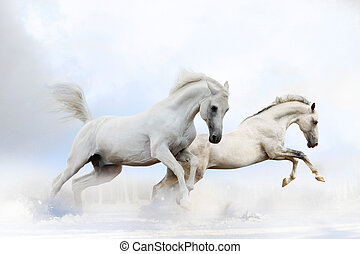 chevaux, neige