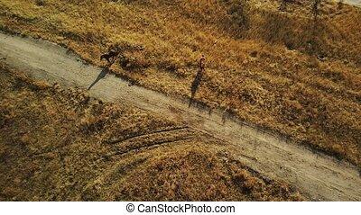 chevaux, oeil, animaux, countryside., ensoleillé, marche, pâturage, champ, nature, automne, season., jour, vue aérienne, oiseau