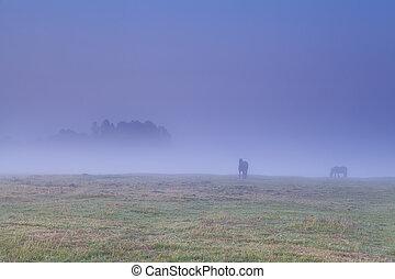 chevaux, pâturage, brouillard, dense, pâturage