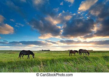 chevaux, pâturage, coucher soleil, pâturage