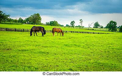 chevaux, pâturage, kentucky