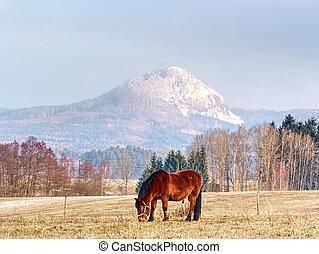 chevaux, pâturage, neige, repos, pâturage
