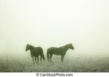 chevaux, prairie