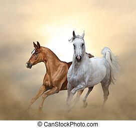 chevaux, purebred, deux, courant, coucher soleil, temps