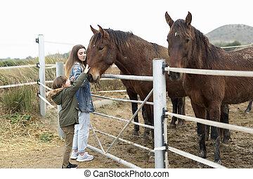 chevaux, rojales., abri, deux, soeurs, jouer