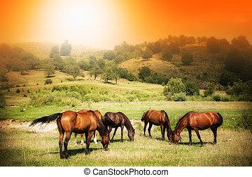 chevaux sauvages, sur, champ vert, et, ensoleillé, ciel
