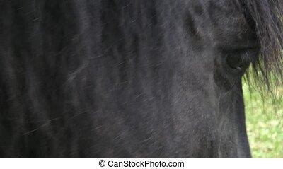 chevaux, sec, cheval, feeding., ranch, manger, nourriture., foyer., sélectif, portrait, manger