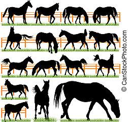 chevaux, silhouettes, ensemble, vecteur, 16