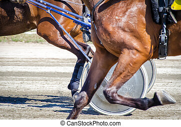 chevaux, strollers., harnessed, racing., harnais, léger, courses