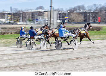 chevaux, strollers., harnessed, racing., harnais, léger,...