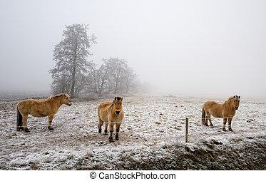 chevaux, sur, a, froid, hiver, jour