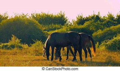 chevaux, trois