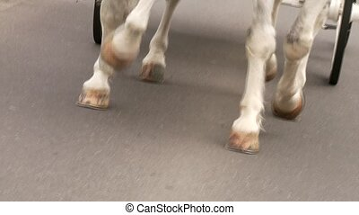 chevaux, voiture, blanc