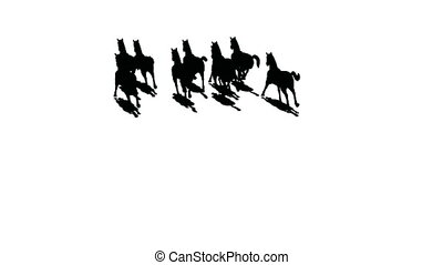 chevaux, vue dessus, silhouette, troupeau