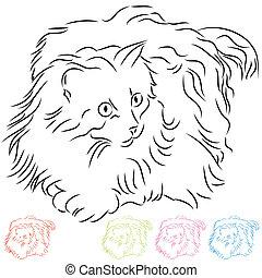 chevelure, long, chat ragdoll