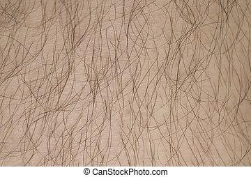 cheveux, blanc, texture., fond, peau