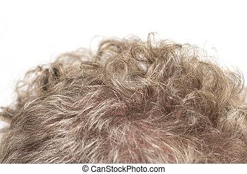 cheveux, gris, man., fond, macro