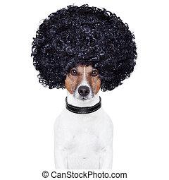 cheveux, rigolote, afro, regard, chien
