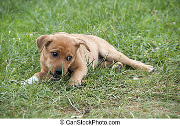Chewing on a Stick