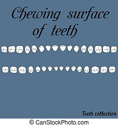 Chewing surface of teeth