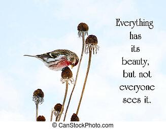 chińczyk, przysłowie, o, piękno, w, natura, z, niejaki, ładny, samiec, wspólny, redpoll, ptak, perched, na, niejaki, zmarły, stokrotka, badyl, jedzenie, posiew, w, przedimek określony przed rzeczownikami, winter.