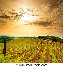 Chianti region, vineyard, trees and farm on sunset. Tuscany...