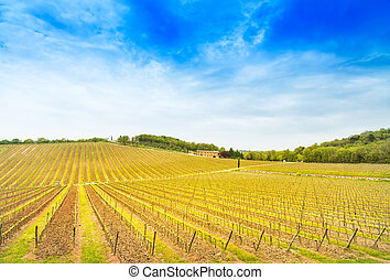 Chianti region, vineyard, trees and farm on sunset. Tuscany, Italy, Europe.