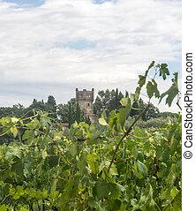 Chianti, Tuscany - Landscape in Chianti (Florence, Tuscany,...